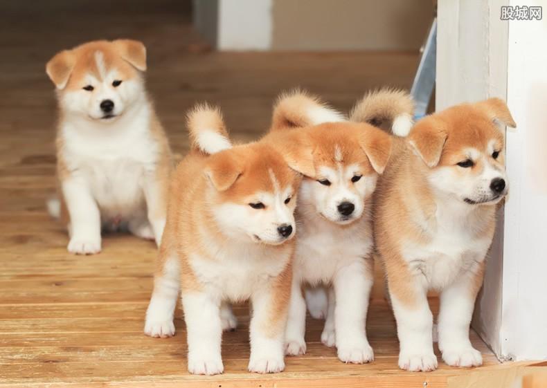 开宠物店赚钱吗,开店一定要注意这些事-第1张图片