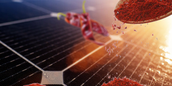 Researchers found that Solar panels capture more sunlight with capsaicin – the chemical that makes chili peppers spicy…